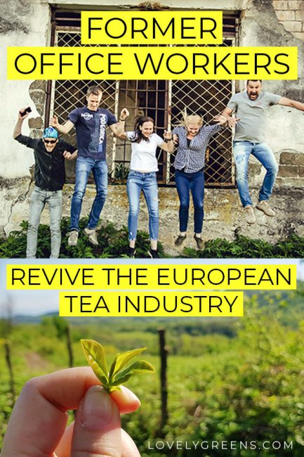 Former Office Workers revive the European Tea Industry #tea #georgia #farming #youngfarmers #organicgardening #organicfarming #millenials #green #eco #environmentallyfriendly #greennews