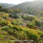 A printable Fall Gardening Checklist including autumn gardening tasks for plant care, soil care, tools, and lawn #gardeningtips #fallgarden #vegetablegarden
