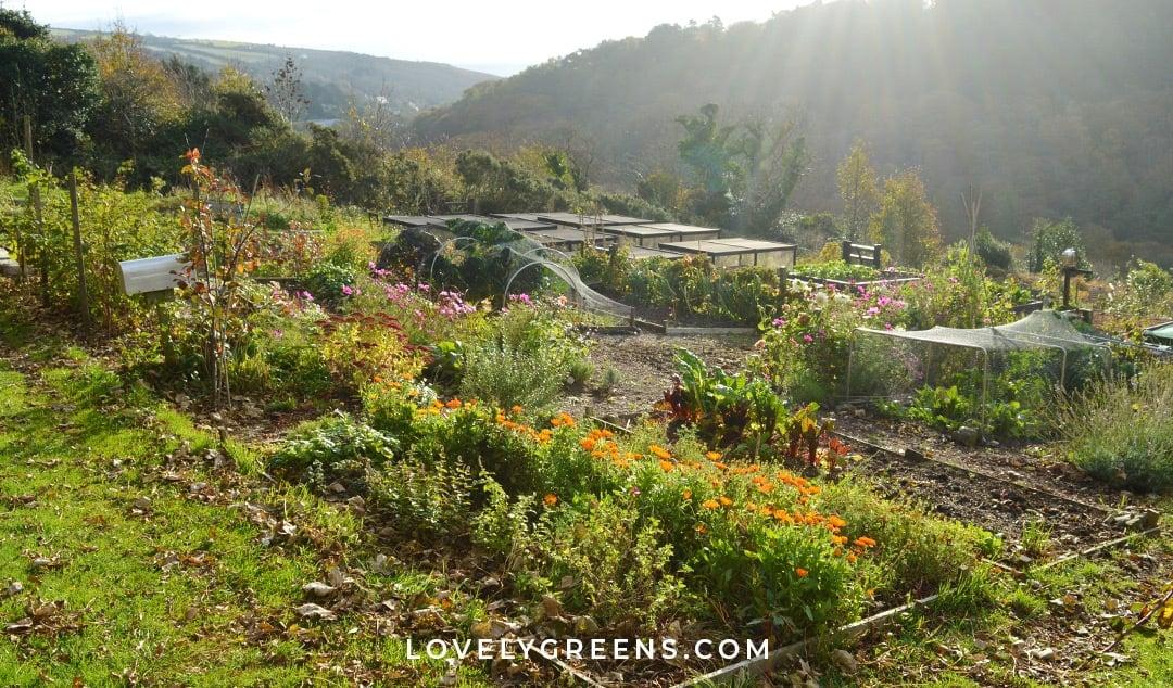 Fall Gardening Checklist (printable garden tasks to prepare for winter)