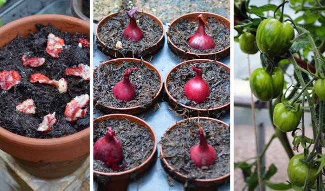 What to Plant in Autumn: Christmas potatoes, onions, & leafy greens