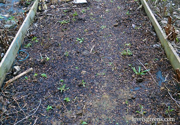 Frugal Gardening Idea: Create Wood Chip Garden Paths