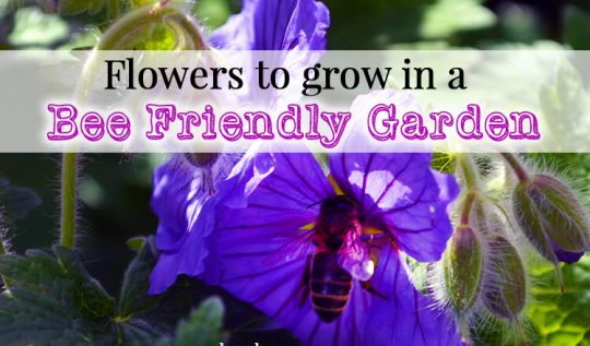 Flowers to grow in a Bee Friendly Garden