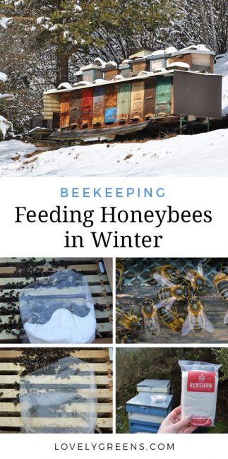 Feeding Bees in Winter + Early Spring Hive Inspection -- tips on how a beekeeper can feed bees in the winter if their honey stores are low. Includes recipes for fondant and instructions on how to feed it to honeybees #beekeeping #honeybees #beekeeper #savethebees