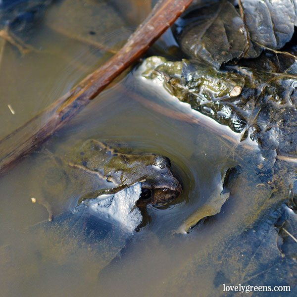 How to build a small garden pond that will attract beneficial wildlife