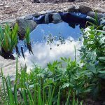 Building a Small Garden Pond for Wildlife