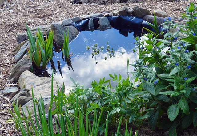 How to build a Small Pond for the Garden