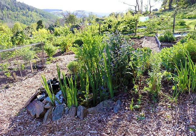 How to build a Small Pond for the Garden • Lovely Greens