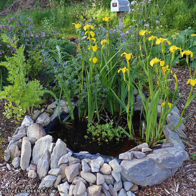 How to build a small pond for the garden lovely greens for Garden pond building instructions