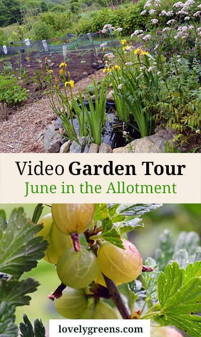June Video Garden Tour + a Peek into my Neighbour's Gardens