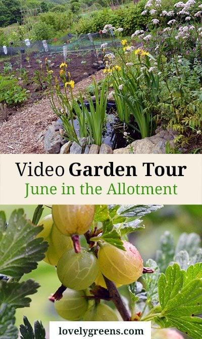 June Video Garden Tour + a Peek into my Neighbour's Gardens