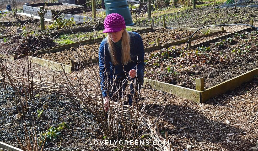 February Garden Jobs for the Vegetable Garden