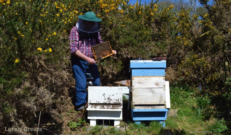 Getting started with Beekeeping: tips for the beginner beekeeper