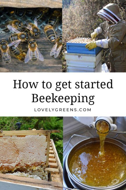 Getting started with Beekeeping: tips for the beginner beekeeper including hive location, equipment, books, and where to begin #beekeeping #homesteading #selfsufficient