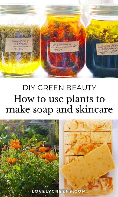 An introduction to how to use herbs and flowers to make natural herbal skincare. Covers making extracts from herbs and flowers and using them to make lotions, creams, and other beauty items. Part of the DIY Herbal Skin Care series #herbs #diybeauty #greenbeauty