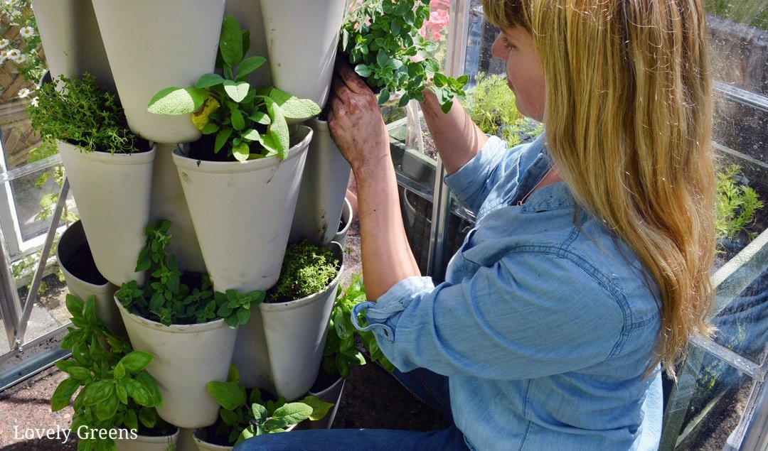 Grow a vertical herb garden in a small growing space