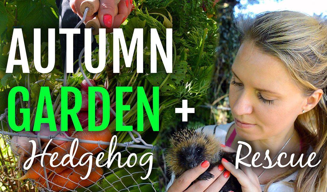 Autumn Gardening + Hedgehog Rescue