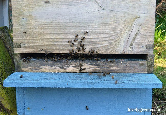 The Honeybees in March: the first colony inspection of the year
