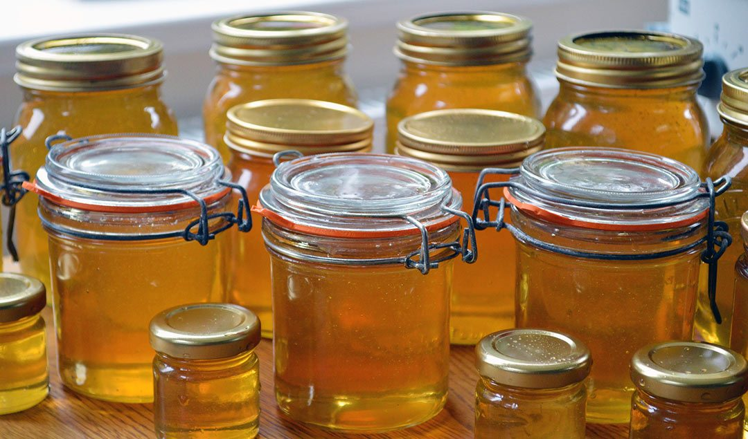 Why I'm feeding honey to bees (and why you shouldn't be)