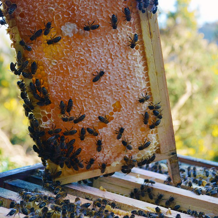 The Honeybees in March