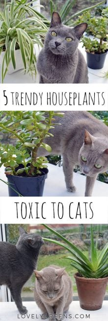 Extraordinary Plants That Are Not Toxic To Cats Pictures: houseplants not toxic to cats