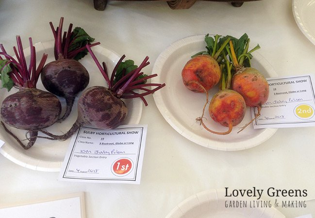 Beets and turnips at the Sulby Horticultural Show