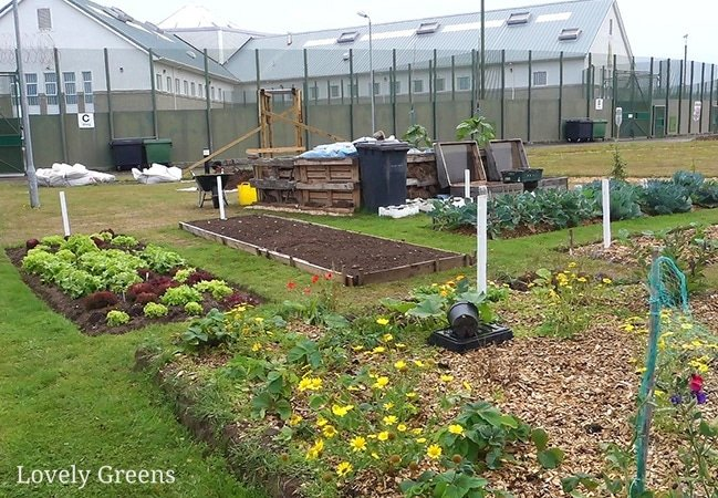 Visiting a Prison Vegetable Garden: how growing vegetables is helping prison inmates find a new path #lovelygreens #gardentherapy #growyourown
