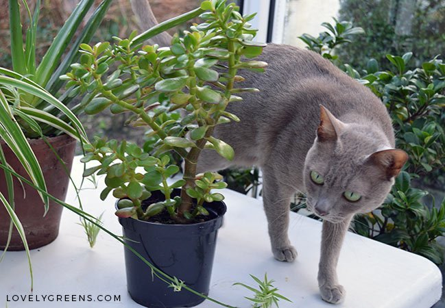 5 Trendy Houseplants that are Toxic to Cats