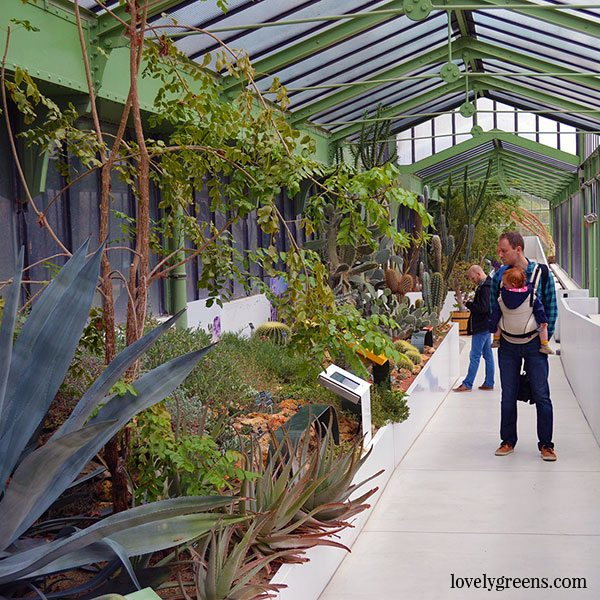 The Desert and Arid Land Glasshouse at the Jardin des Plantes Botanical Garden