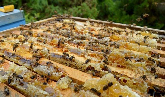 Bad Beekeeper + Loads of Honey