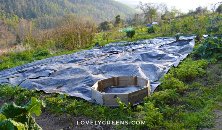 How to use black plastic to kill weeds and clear land