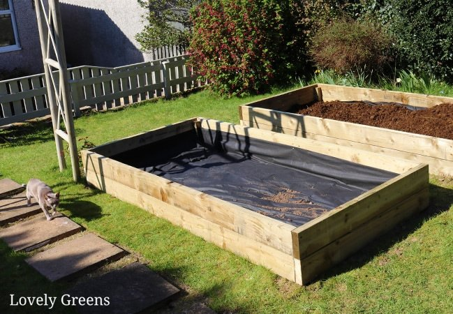 Tips on building raised garden beds including guidance on the best sizes, types of wood, and what to fill them with to grow vegetables #lovelygreens #diygarden #raisedbeds
