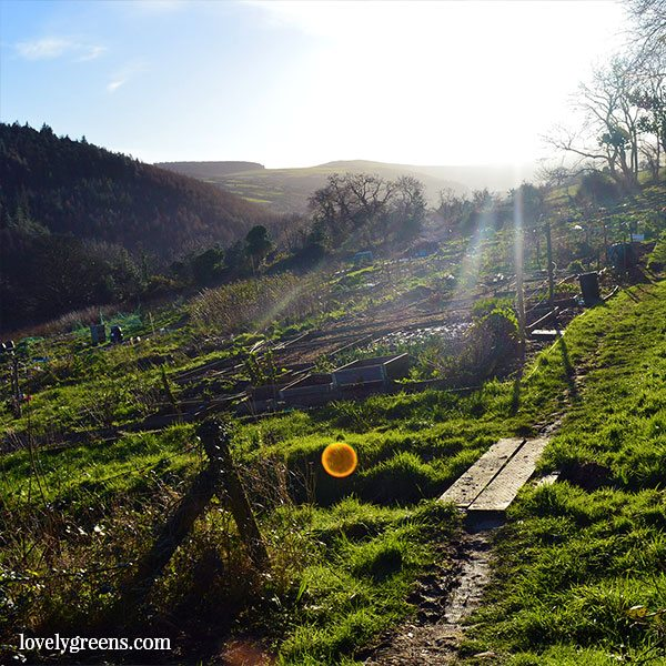 Early March in the Allotment Garden: Pond, Paths, and Progress