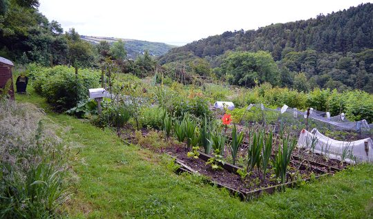 Saying Goodbye to the Allotment Garden