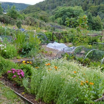 Lovely Greens shares how to grow wholesome food & plant-based skincare in your own practical garden #gardeningideas #gardeningtips #herbgarden