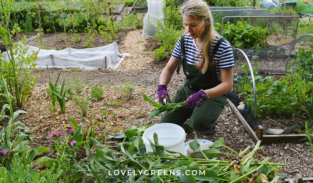 How to Make DIY Plant Fertilizer for the Vegetable Garden