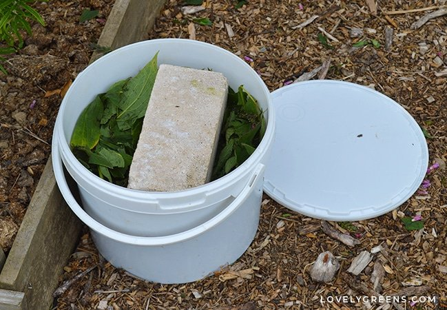 Make inexpensive environmentally-friendly homemade organic fertilizer for your vegetable garden from foraged and waste materials. Includes DIY Organic Fertilizers you can make from seaweed, comfrey, and nettles. #gardenngtips #organicgarden #vegetablegarden