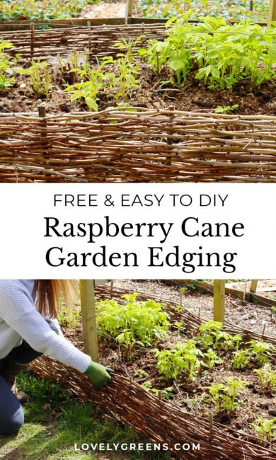 DIY Raspberry Cane Garden Edging: use pruned raspberry canes to create attractive woven garden edging. This easy project is great for the vegetable garden or for decorative borders #garden #DIYgarden #gardeningidea
