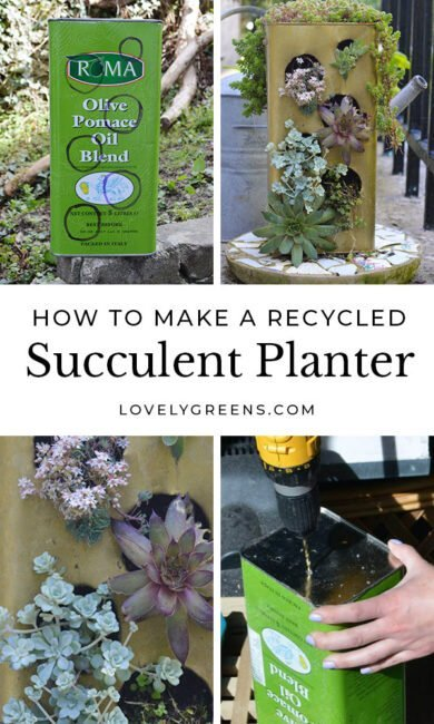 How to make a recycled succulent planter from an old olive oil tin. This project shows how to create the holes in the tin, and plant it up with a variety of succulents #gardening #diygarden #succulents