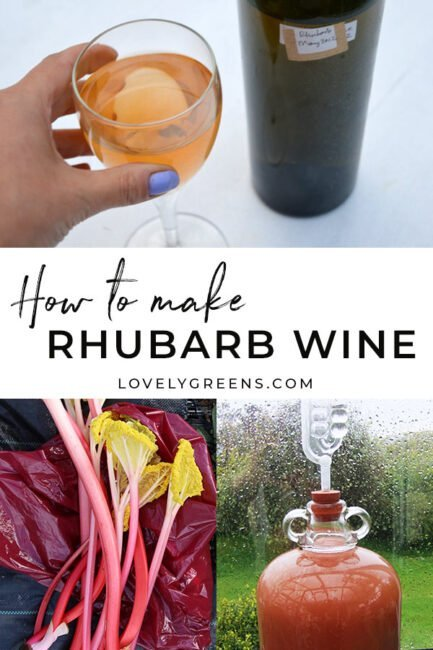 Use fresh spring rhubarb and a few other ingredients to make this rhubarb wine recipe. Includes tips on equipment and the full winemaking process #rhubarb #rhubarbrecipe #winemaking #kitchengarden