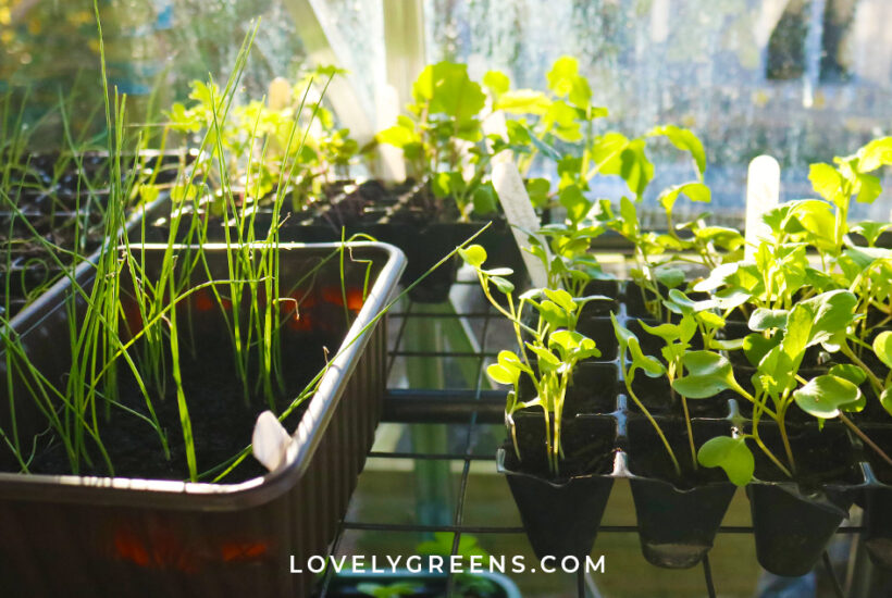 March garden jobs including seeds to sow, crops to harvest, garden projects, and early spring tasks for the vegetable garden #gardeningtips #vegetablegarden #gardenideas