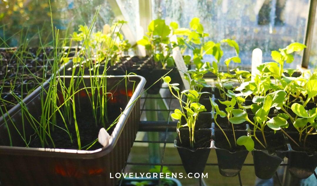 March Garden Jobs for the Vegetable Garden