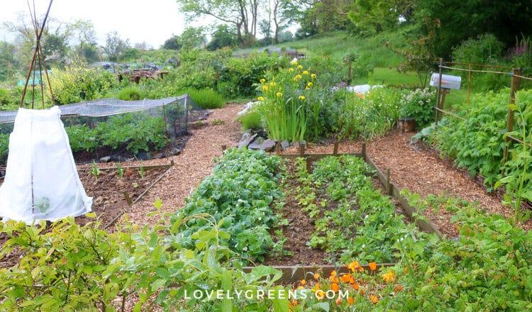 May Garden Jobs for the Vegetable Garden