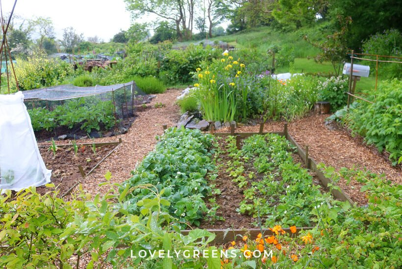 May garden jobs including seeds to sow, crops to harvest, garden tasks, and DIY projects. Use these tips to have your garden flourishing with homegrown produce and flowers #gardeningtips #vegetablegarden #garden