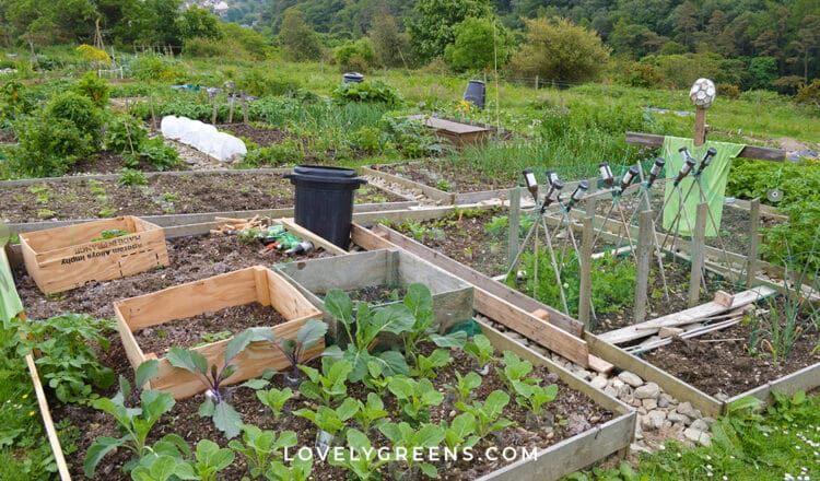 Clever Ideas for Gardening on a Budget