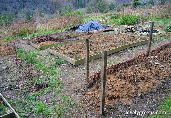 Frugal Gardening Idea: Create Wood Chip Garden Paths