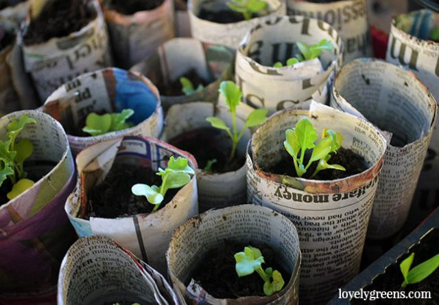 Two Ways To Make Newspaper Plant Pots Lovely Greens