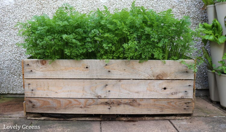 How to build a Pallet Planter