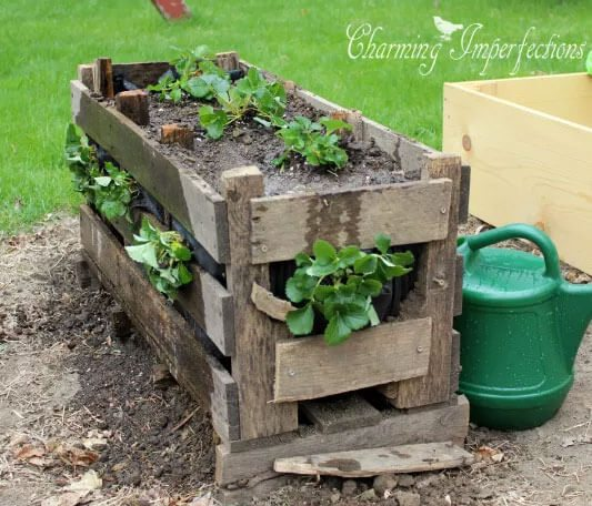 Readers make their own Strawberry Pallet Planters