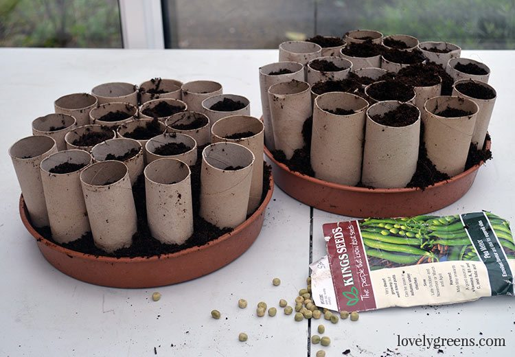 12 Recycled Ideas for Seed Starting
