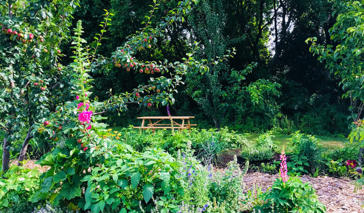 6 Ways to Use Sustainable Garden Design in your Backyard